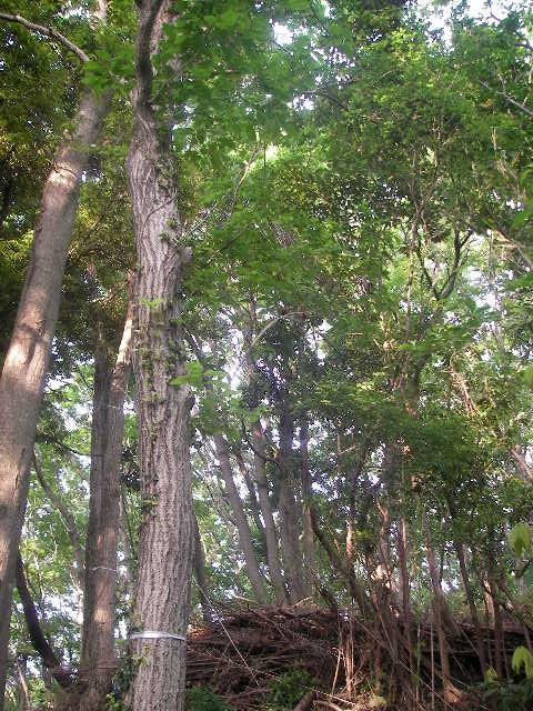 kisaradu01_forest