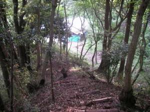kisaradu05_forest